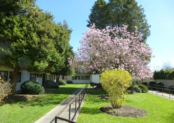 Spring flowers and new leaves | Kopernik Lodge beautiful grounds