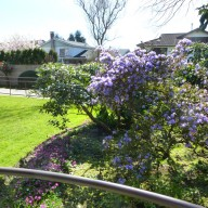Fresh green grass and bright coloured flowers – spring is here!